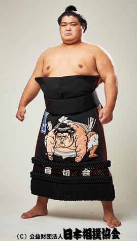志摩の海力士のwiki的プロフィール!過去の優勝回数と相撲の成績は?